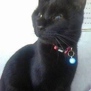毛並みの綺麗な猫です!よろしくお願いします!