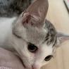 穏やかな美猫の…銀ちゃん3ヶ月半 サムネイル2