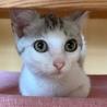 穏やかな美猫の…銀ちゃん3ヶ月半 サムネイル3