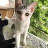 穏やかな美猫の…銀ちゃん3ヶ月半 サムネイル5