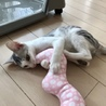 穏やかな美猫の…銀ちゃん3ヶ月半 サムネイル6