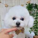 神楽坂(かぐらざか)甘えん坊の元気ちゃん