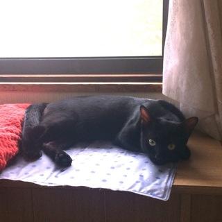 一歳の黒猫4兄弟です①