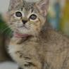 淡いムギワラ猫(ピンク)