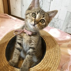 *幸せ探しのネコ譲渡会*子猫* サムネイル1