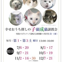 *幸せ探しのネコ譲渡会*子猫* サムネイル3