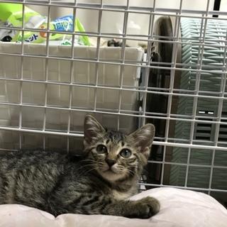 悪環境で必死に子育てママ猫と子猫保護