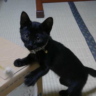 オスの黒猫の雑種です!