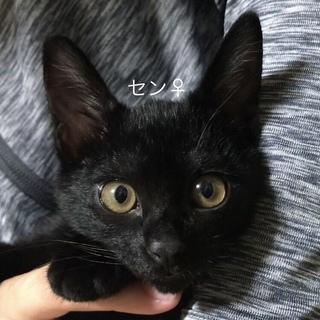 里親募集中!メスの黒猫の雑種です!