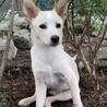 【募集停止中】中型犬MIX、レモン(メス) サムネイル2