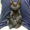 自宅で生まれた子猫ちゃんの募集です!