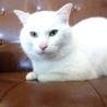真っ白ネコの王子くん