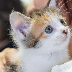 愛知県みよし市・ネコを愛するネコ好きのための譲渡会