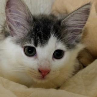 6月1日生まれの子猫