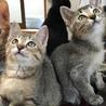 寒川町民センターでの保護猫譲渡会!
