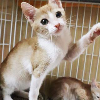 元気いっぱい子猫⭐︎小顔美人なアネラちゃん