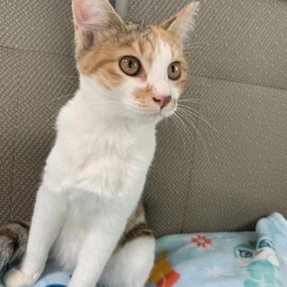 超フレンドリー 穏やかな三毛猫ちゃん‼️