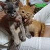 生後1ヶ月半の可愛い子猫たち