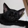 可愛い小柄な黒猫りりすちゃん サムネイル2