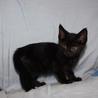可愛い小柄な黒猫りりすちゃん サムネイル4