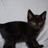 可愛い小柄な黒猫りりすちゃん サムネイル5