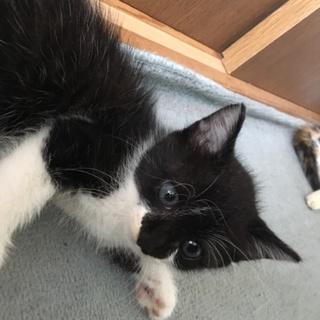 7月生まれ 子猫