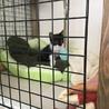 7月生まれ 子猫  サムネイル2