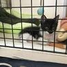 7月生まれ 子猫  サムネイル3