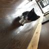7月生まれ 子猫  サムネイル4