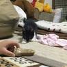 7月生まれ 子猫  サムネイル7
