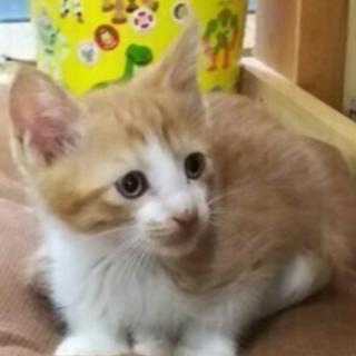 6月20生まれの子猫