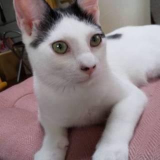 白黒  可愛いドット模様のブッチー