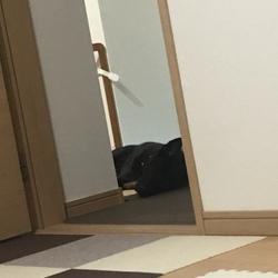 元保護犬アルの日常