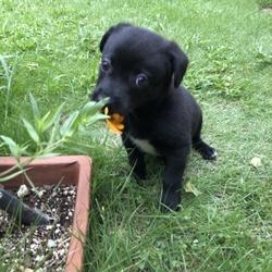 「お花は食べないで」サムネイル1