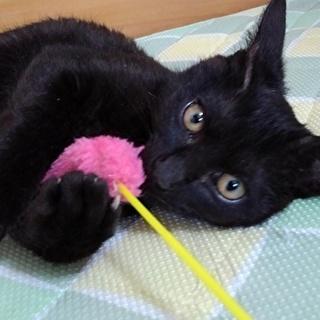 幸せを呼ぶカギしっぽの黒猫少年です♪