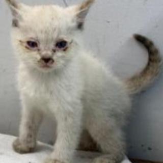 可愛い子猫3兄弟。収容期限9/25朝迄