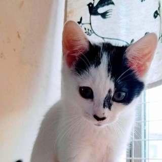 調布市☆美形の子猫