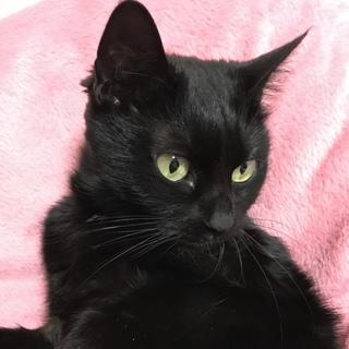 珍しいグリーンアイの黒猫ちゃん★彡