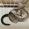 まん丸お目目がかわいい子猫