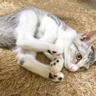 生後2ヶ月〜3ヶ月の兄弟子猫