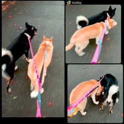 「一緒にお散歩」サムネイル1