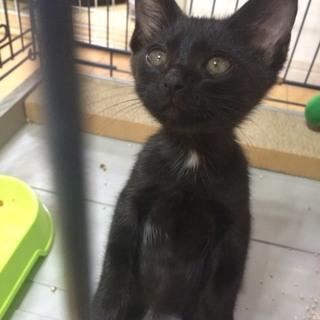 お目目クリクリ❣️黒猫の可愛い女の子♪