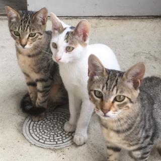 かわいい子猫の里親募集中です
