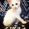 らいとくん(仮)〜白い子猫ちゃん〜