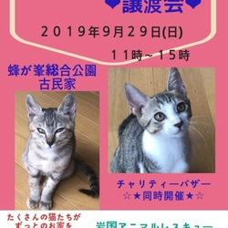 保護猫の譲渡会In山口県