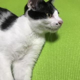 可愛い子猫の里親さん募集中です