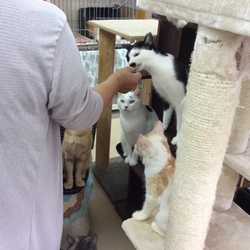 「保護猫たちも夢中」サムネイル3