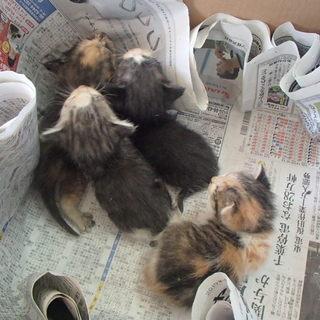 子猫の里親募集