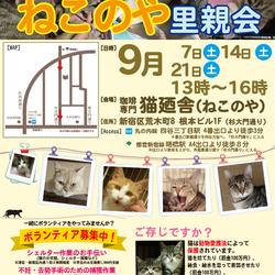 9月21日(土) 四谷猫廼舎 里親会(ボランティア募集中)