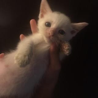 1番小さな1ヶ月の女の子